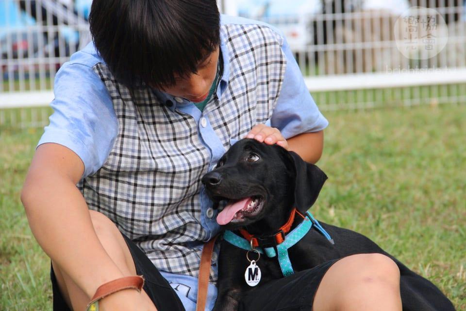 活動報告 – 2018 藝術,讓愛發聲 穿越景框,讓愛顯影 II Photography & Animal Welfare Advocacy